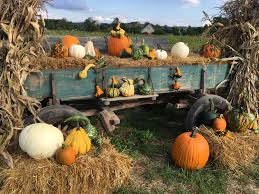 Pumpkin Patch Corpus Christi by Pick Your Own Pumpkins At Cross The Creek Farm Ship Saves