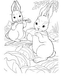 Rabbit Coloring Pages Eating Vegetables