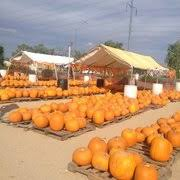 Pumpkin Patch Glendale Co by Sunburst Farms Fruits U0026 Veggies 16136 N 47th Ave Glendale Az