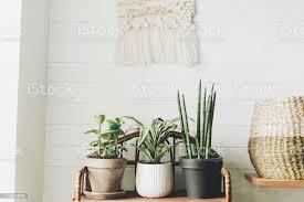 stilvolle grünpflanzen in töpfen auf hölzernem vintageständer auf dem hintergrund der weißen rustikalen wand mit stickerei hängen peperomia