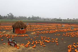 Alameda Pumpkin Patch 2015 by 6 Best Pumpkin Patches In The Bay Area