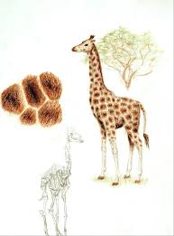 Giraffe Color By Number Coloring Pages For Adults Picture Printable Pencil Drawing Full Size