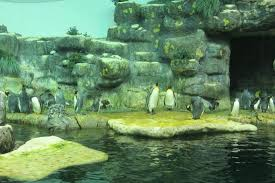 Moody Gardens Aquarium Pyramid Picture of Moody Gardens