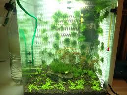 idée déco pour l aquarium