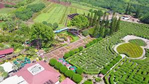 Garden Maze Stock Footage Video