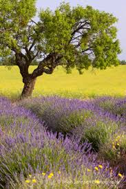 Murray Pumpkin Patch Bakersfield Ca by 362 Best Paysages Floraux Images On Pinterest Nature Landscapes