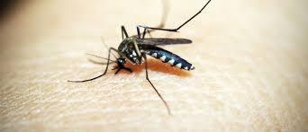 mücken im schlafzimmer mit diesen tricks wirst du sie los