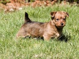 best 25 non shedding dogs medium ideas on pinterest medium size