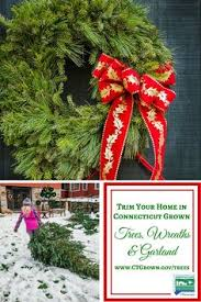 Christmas Tree Shop Middletown Ny by Hickory Ridge Tree Farm Coventry Ct Www Hickoryridgetreefarm Com