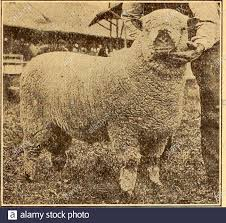 100 Arbuckle Truck Driving School Lambs Let Stock Photos Lambs Let Stock Images Alamy