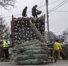 Christmas Tree Shop Colonie Center Ny by Thieves Cut Down Blue Turquoise Christmas Trees Troopers Say