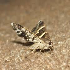 mottenbefall erkennen ursachen und tipps gegen die schädlinge