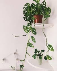 friends houseplants pilea dekoration schlafzimmer