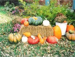 Varieties Of Pumpkins by Powell Pumpkin Patch Varieties