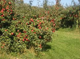 Pumpkin Farms Near Milwaukee by Milwaukee Kukhnya Mn Mondays Pine Tree Apple Orchard