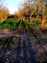 Bishop Pumpkin Farm Wheatland Ca by California Cullumber Family Bishop U0027s Pumpkin Farm