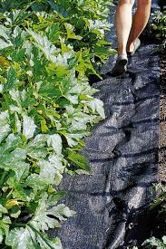 Choosing the Right Mulch for Ve able Gardens Gardener s Supply