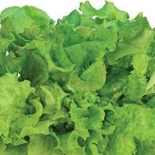 salad greens seed kit 6 7 pod for indoor salad gardens aerogarden