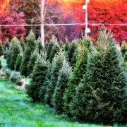 Elgin Il Christmas Tree Farm by Miller U0027s Christmas Tree Farm 16 Photos Christmas Trees 470