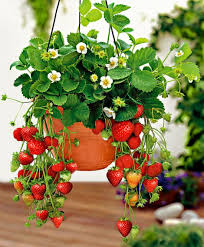 Strawberry Planter Ideas Pinterest Best Projects Video