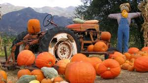 Free Pumpkin Patch Charleston Sc by The North Columbia Food Park Farmers Market Hosts Fall Festival
