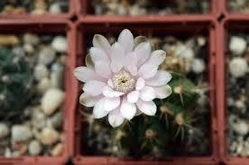 1000 Watt Hps Bulb Hortilux by Best 1000w Hps Bulb For Flowering Plants Grow Lights 2017 Reviews