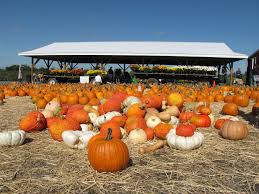Old Mcdonalds Pumpkin Patch Scottsdale by Phoenix And Scottsdale Events In October