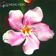 promtions 50 pcs nerium graines fleur laurier en pot plantes