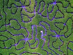 Petaluma Pumpkin Patch Corn Maze Map by Textures Macro Photography Abstract U2014 Chris Mccann Photography