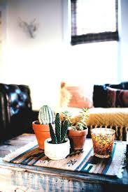 Apartment Living Room With Bohemian Decor Best Ideas Cactus Plants Cacti Garden