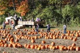 Hamilton Ohio Pumpkin Festival by Mcmonigle Farms Pumpkin Fest Middletown Oh 45042