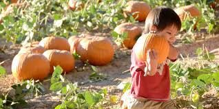Schnepf Farms Halloween 2017 by Schnepf Farms Remains Open After Farmhouse Fire But What U0027s Next