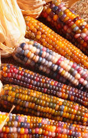 Rainbow' Corn Has Kernels That Look More Like Gems Prettiest Popcorn I Ever Did Grow The Unfettered Fox Glass Gem Corn Littlegirlstory Glass Gem Corn The Cover Of Our Whole Seed Catalog Carls Flint Is An Unbelievably Stunning Bred By Part Hdenosaunee The Iroquois Confederacy Tuscarora White Oliveloaf Design Afbeeldingsresultaat Voor Peru Brazil Colored Pinterest 9 Best Sweetcorn Images On Color 2 Cob And Maze Story Behind Business Insider 1293 Indian Fruit Pink Popcorn