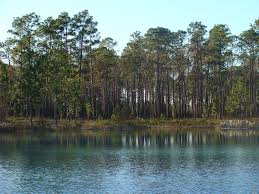 Pumpkin Patches Near Tallahassee Florida by Apalachicola National Forest Wikipedia