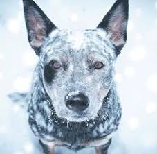 life is ruff get a dog 51 photos hyena cattle and dog