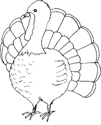 Free Printable Turkey Coloring Pages Me For Kids