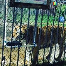 Free Tony The Tiger - Home | Facebook 45 Tiger Truck Stop Trucker Jims Truckin Journey Youtube The Is Here To Stay Vice Kept At Iberville Parish Truck Stop Dies Tony The Update Owner Plans Pursue Another Tiger Stuff For Free Jobyronkuhnercom Kept At For 17 Years Dies But Legal Battle Isn September 28 2015 2 Louisiana Cdllife Abandoned Sign Along I2 Flickr