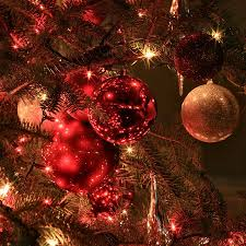 Best Live Christmas Trees To Buy by Where Can I Buy Christmas Trees Christmas Lights Decoration