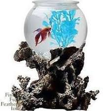 Lava Lamp Fish Tank Walmart by Aqua Culture 1 Gallon Betta Aquarium Got This For My Birthday