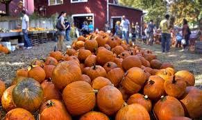 Pumpkin Farm Illinois Best by The 10 Best Pumpkin Patches In America