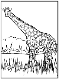 Giraffe Foraging In Grass Coloring Picture For Kids