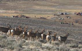 Shed Hunting Utah 2017 by Antler Obsession Can The Search For U201csheds U201d Threaten Wildlife