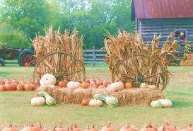 Columbus Pumpkin Patch by Pumpkin Patch Farm In Adairsville Ga