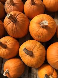 Stoney Ridge Pumpkin Patch Bellingham Wa by 100 Take Your Pick Of Whatcom County Pumpkin Patches U0026