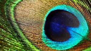 Peacock Feathers Wallpapers HD