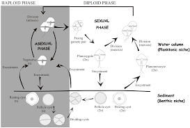 Eds Seafood Shed Mobile by Microorganisms Free Full Text Towards An Ecological