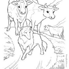 1000 Images About Umpqua Dairy Coloring Pages On Pinterest