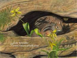 Original Colored Pencil Drawing Of A Little Chipmunk In An Old Log By Judy Schrader