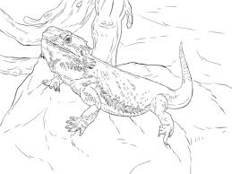 Central Bearded Dragon Coloring Page Free Printable Pages Regarding With Regard