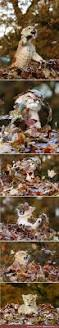 Snopes Drugged Halloween Candy by 1000 Images About 動物1 On Pinterest Squirrel Beautiful Cats